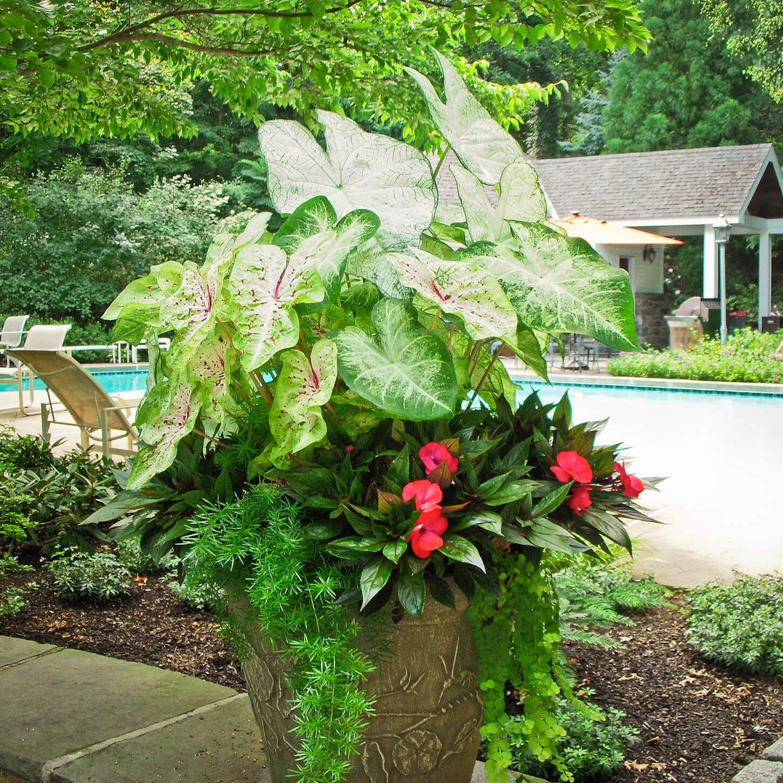 Abington, PA Landscaping Services